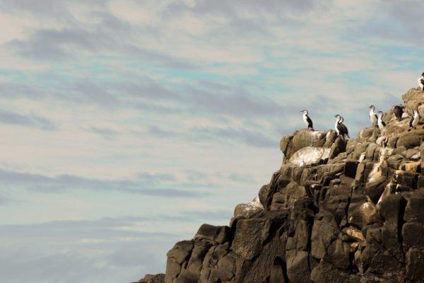 Free Spirit Pods - Bruny Island Accom Photos (18)